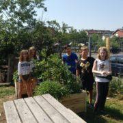 vorbildlicher Schulgarten und erste Gartenklasse an der Gemeinschaftsschule in Weil am Rhein